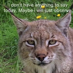 Lynx Observe